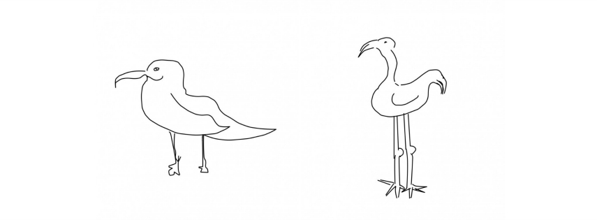 Sketch of a seagull and a standing bird